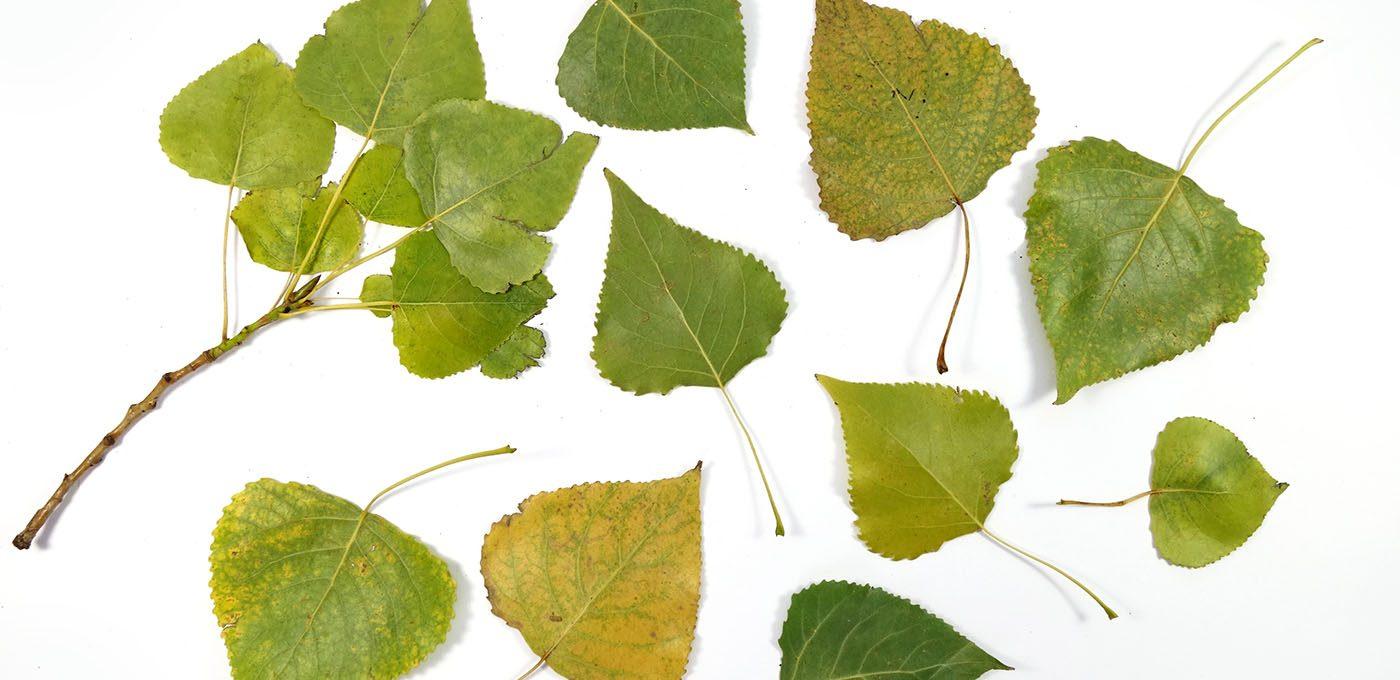 Herbstliches Geschenkpapier mit Blättern