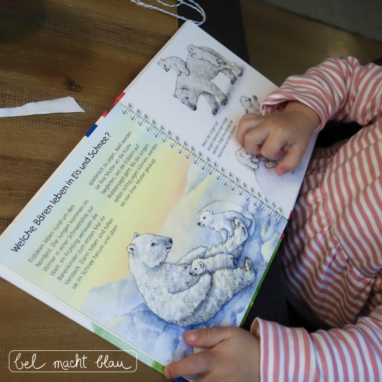 Eisbären-Geburtstag: Geschenkideen zum 2. Geburtstag